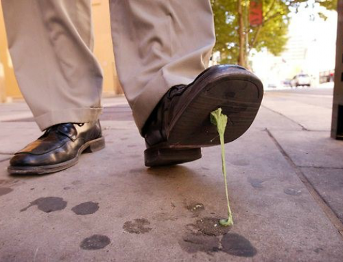 Chewing gum removal on pavements