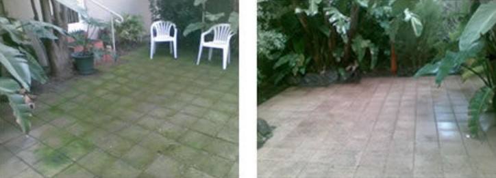 moss prevention and removal