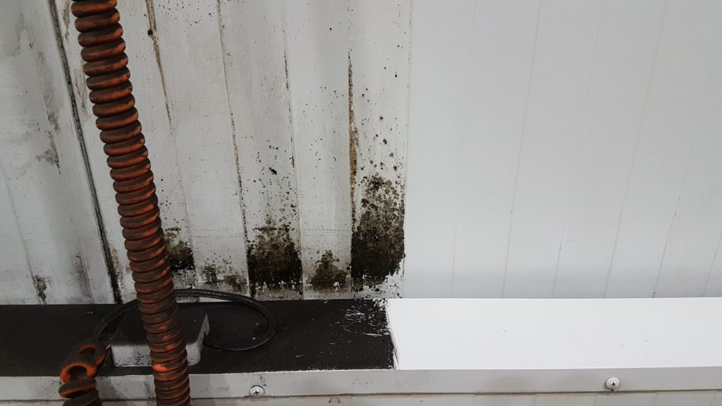 kitchen mould removal
