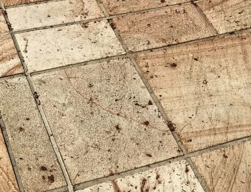 Stains On Sandstone Pavers