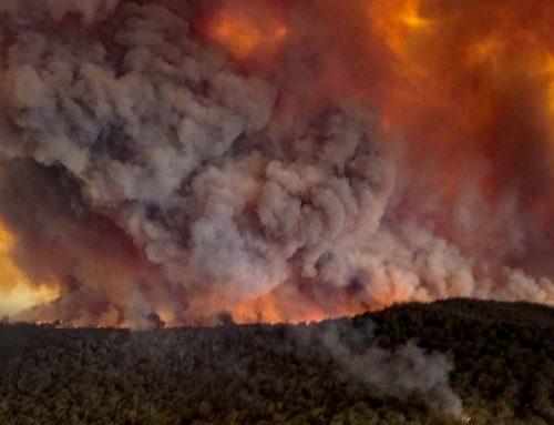 Bushfire Clean Up