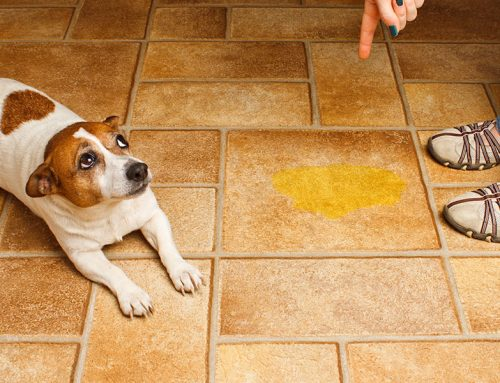 Cleaning Animal Urine Stains