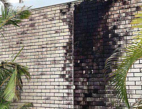 Heavy Mould On Brick Walls